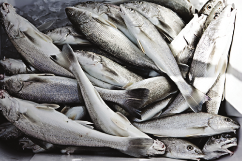 how to feed saltwater fish frozen food